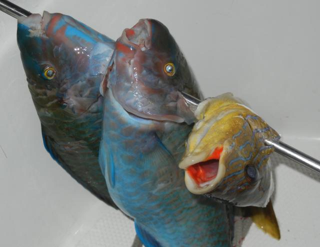 Go fishing in the Bahamas